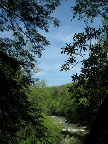 Trees frame river, wooded hill, and blue sky
